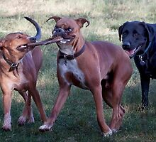 Dogs with game face on .39 by Alex Preiss