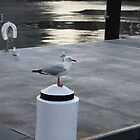 The Obligatory Seagull Shot! by Vicki Childs