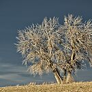 Waiting For Winter On The Colorado Plains by Greg Summers