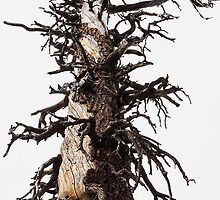 Skeletal Tree Overcast by studiojanney