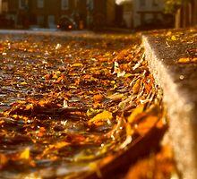 Autumn in Enfield by Nigel Bangert