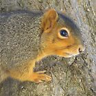 Profile of the Squirrel by lorilee