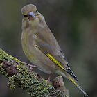 Green finch - II by Peter Wiggerman