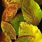 Fall Hydrangea Leaves by Barbara Wyeth