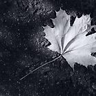 The Leaf, by Darren Richards by MobiTog