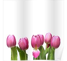 Tulips in Space.... Poster