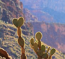 Canyon Cactus by Roupen  Baker