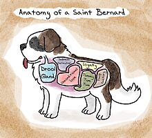 Anatomy of a Saint Bernard by MommySketchpad