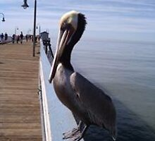 Pelican @ San Clemente Pier by Matthew Nickle