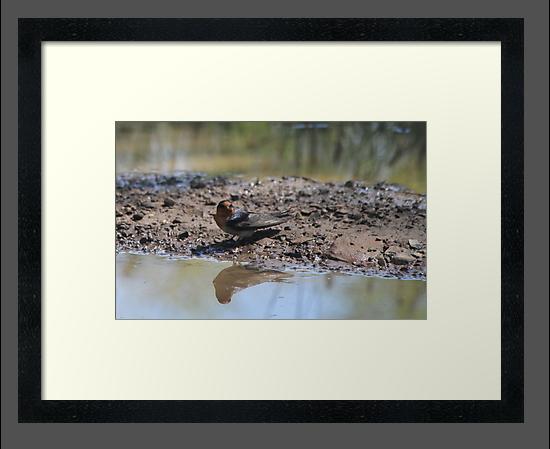 Reflections by Vikki Shedden Photography