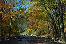 Brandywine Creek by cclaude
