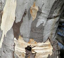 Gum tree bark 8: creased knee by Neroli Wesley