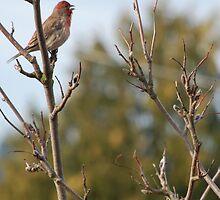 singing bird. by AnjiMarth