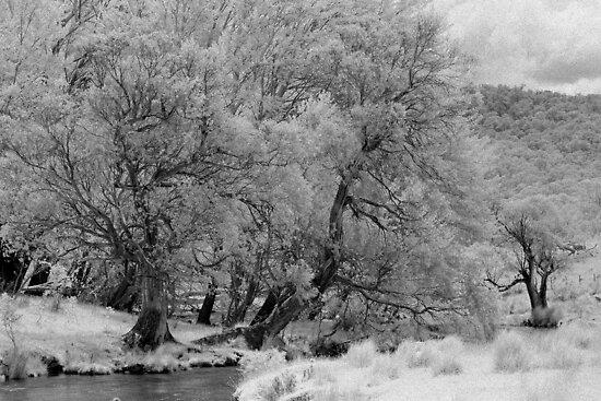Black Sallees, Mowamba River by Syd Winer