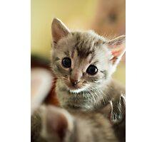 Kitten II Photographic Print