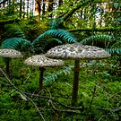 Follow Me Little Ones ~ Wild Mushrooms ~ by Charles & Patricia   Harkins ~ Picture Oregon