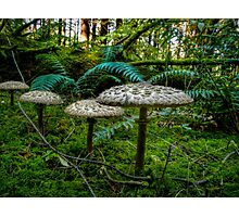 Follow Me Little Ones ~ Wild Mushrooms ~ Photographic Print
