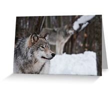 Timber Wolves Greeting Card