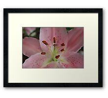 Up Close And Beautiful Pink Lilly Framed Print