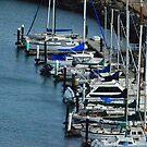 Sail Boats, San Fransisco Bay by kellimays
