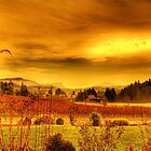 VIneyards, Maple Bay Canada by Andrew  MCKENZIE