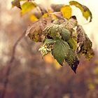 Autumn raspberry by Caterpillar