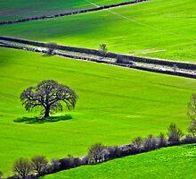 Lone Tree in the Malverns by vivsworld