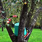 Somerset Cider Orchard by lynn carter