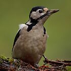 Great spotted woodpecker - II by Peter Wiggerman