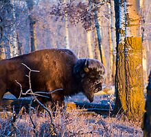 Blue Bison by Timothy Munro
