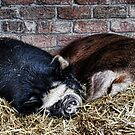 Sleepy Pair Of Pigs by lynn carter