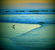 """Shore Bird"" Colorful Beach photo by JackieJeffries"