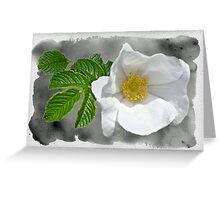 White Beach Rose Wildflower - Rosa rugosa Greeting Card