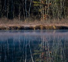 Grebe on a Mirror - Turee Pond - Bow, NH 10-29-13 by David Lipsy