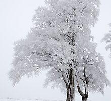 Snowy trees by DarlyB