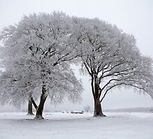 Trees in snow by DarlyB