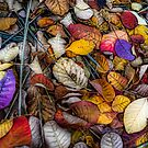 Autumn  leaves by Geraldine Lefoe