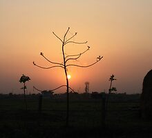 Tree Silhouetted Against A Nepali Sunset by KatyF