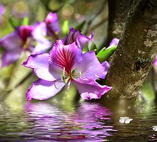 Flower Bauhinia by Nika Lerman