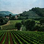Tuscan Vineyard by Mary Ann Reilly