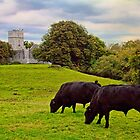 Ireland. Killarney. Ruins of Muckross Abbey.  by vadim19