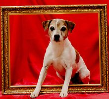 Jack Russell by cher146