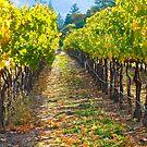 Vineyard Light by Barbara  Brown