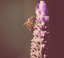 Lavender and the Bee by Good-Thanks