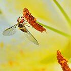 Pollen Feeder by relayer51