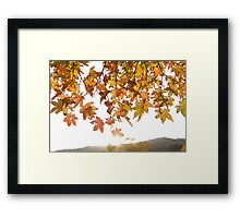 sunrise through the leaves of Momiji (autumn in Japan) Framed Print