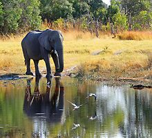 A Scenic Waterhole by jozi1