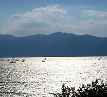 sailboat  race by tbshots