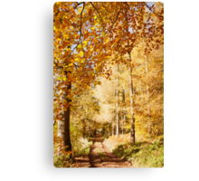 Autumn colors, riverside walk, November 2103  Canvas Print