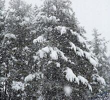 Snowing Heavy - Henniker, NH 02-24-13 by David Lipsy
